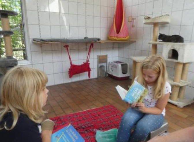 Kinder lesen Katzen vor