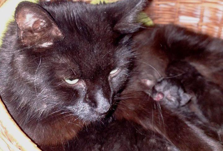 Pflegestellen für werdende Katzenmuttis gesucht