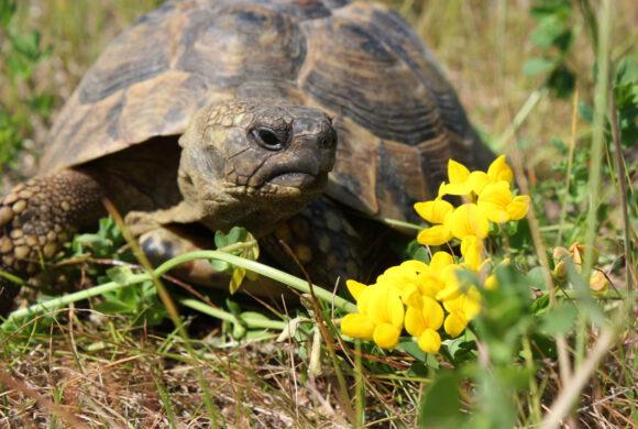 Welt-Schildkröten-Tag am 23.05.