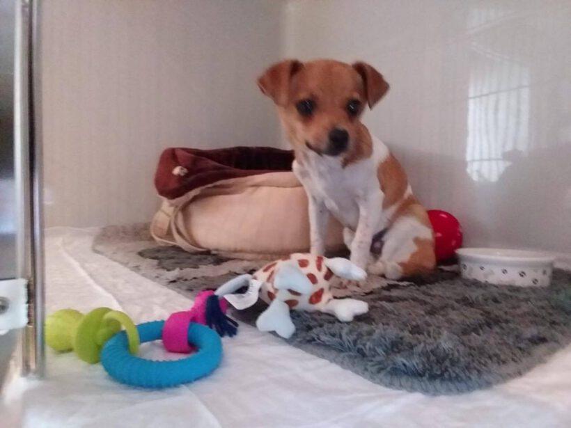 Fundhund: vermisst oder ausgesetzt?