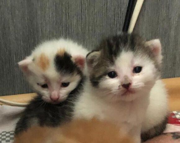 Polly und 4 Babys -3 Kitten reserviert-