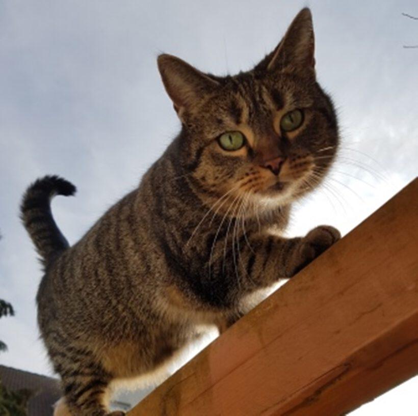 Katze aus Isenbüttel