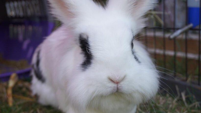 Kaninchen Oskar sucht eine neue Partnerin