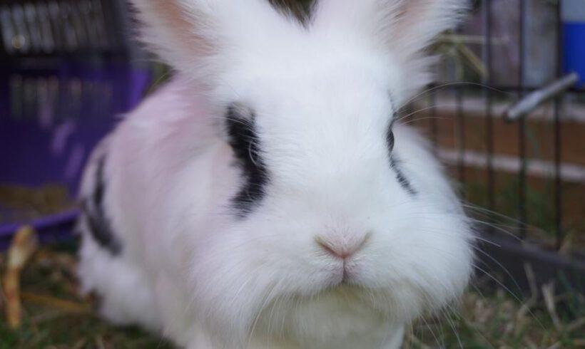 Kaninchen Oskar sucht eine neue Partnerin – gefunden –