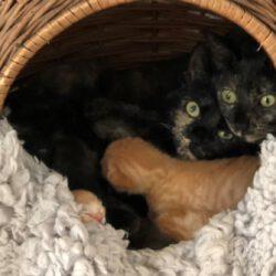 Fina, Josie und 5 Babys -Kitten sind reserviert-