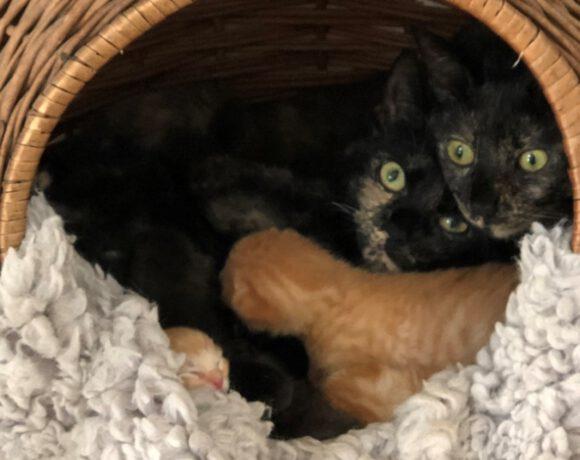 Fina, Josie und 5 Babys