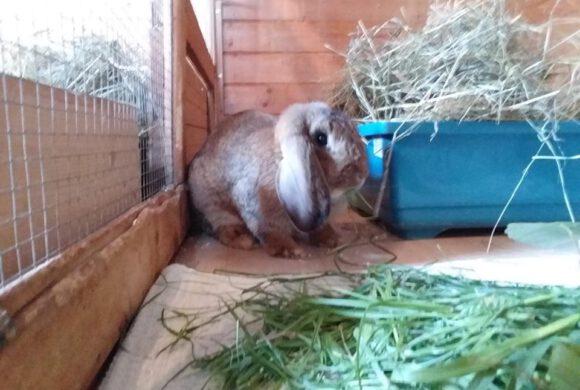 Kaninchen im Wald entsorgt