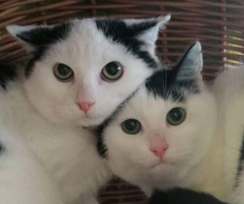 Sammy und Ben, 1,5 Jahre