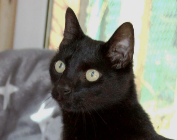 Balou, ca. 5 Jahre