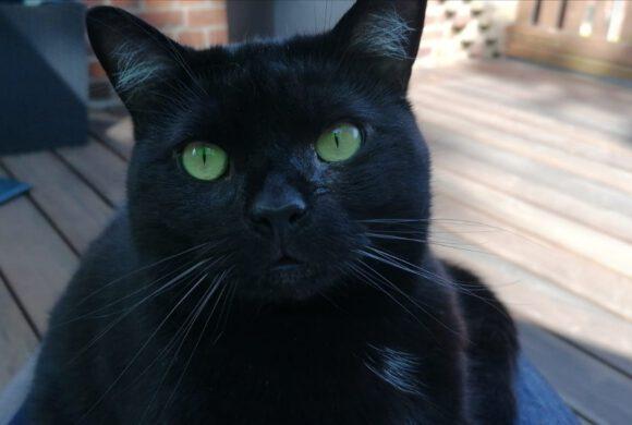 Schwarze Katze aus Müden