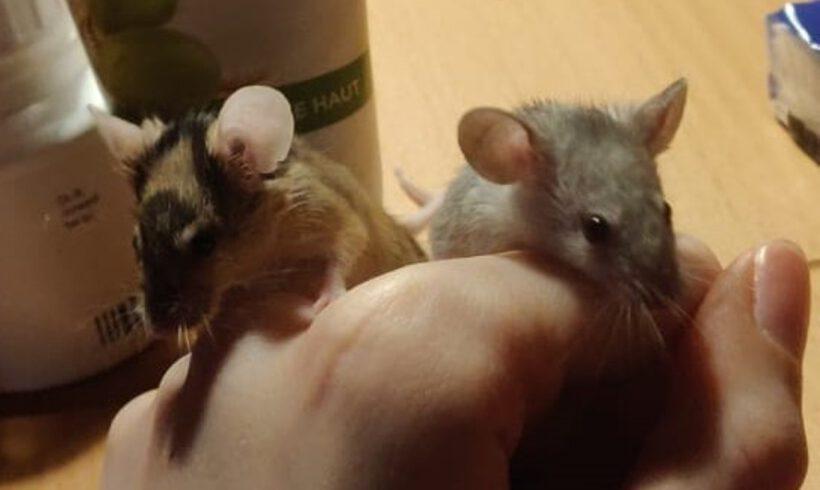 Hanni und Piepsi