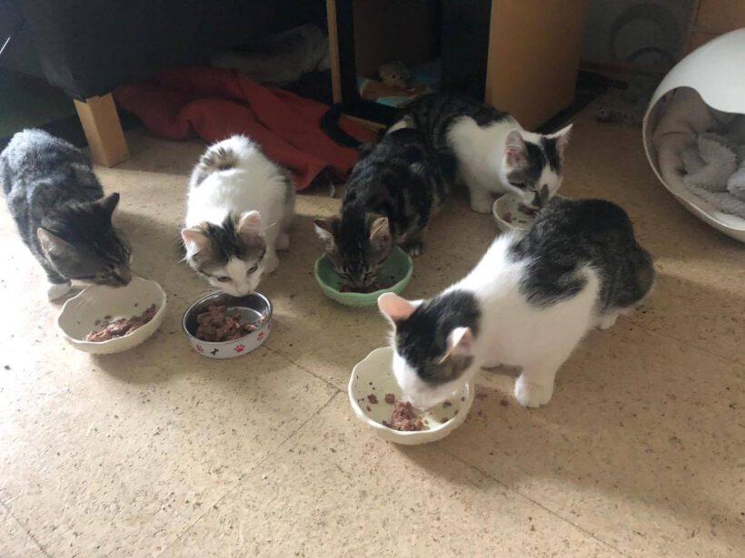 Wir brauchen Katzenfutter
