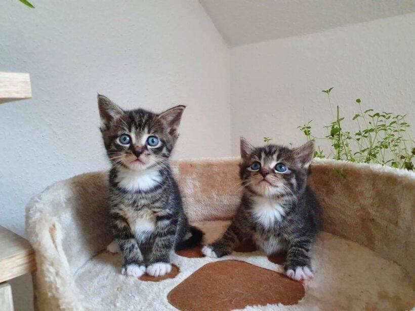Mina und 2 Babys
