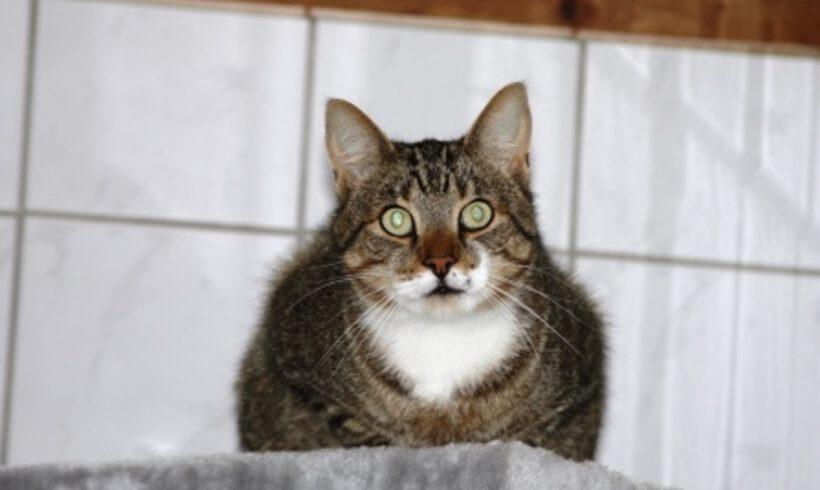 Rocky, 4 Jahre