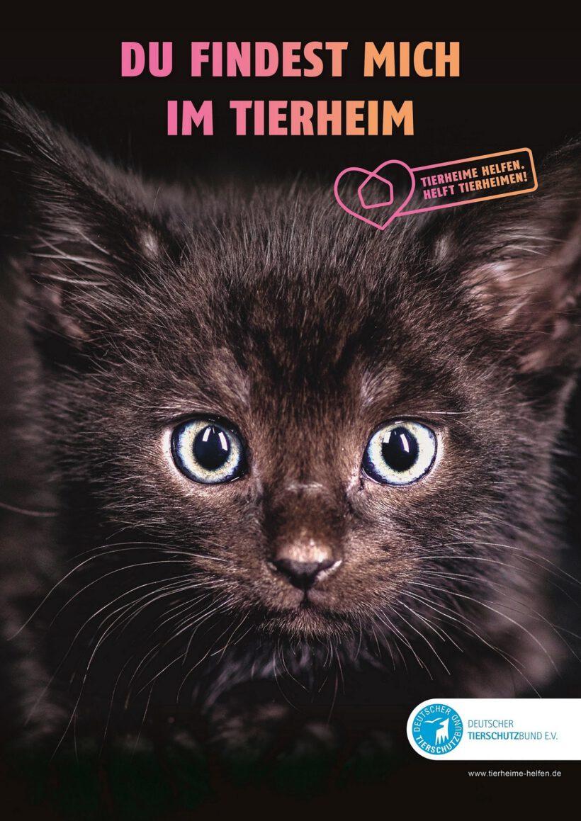 Brich-einen-Aberglauben-Tag (13.9.) Deutscher Tierschutzbund bricht Lanze für schwarze Katzen