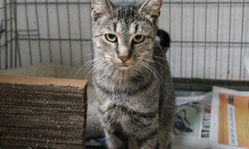 Katze, Gifhorn