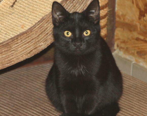 Babsi, ca. 5 Monate -reserviert-