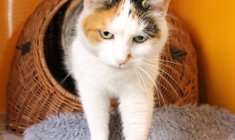Katze aus Gifhorn