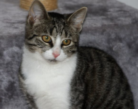 Maika, ca. 5 Monate -reserviert-