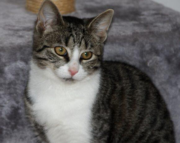 Maika, ca. 5 Monate