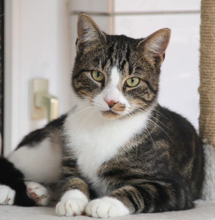 Oskar, ca. 5 Jahre