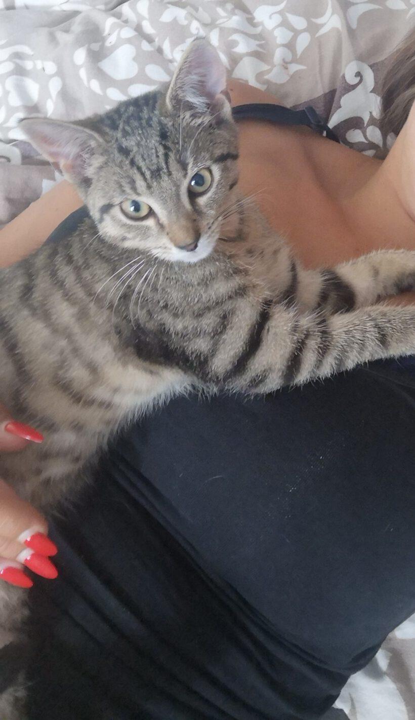 junge Katze aus Gifhorn