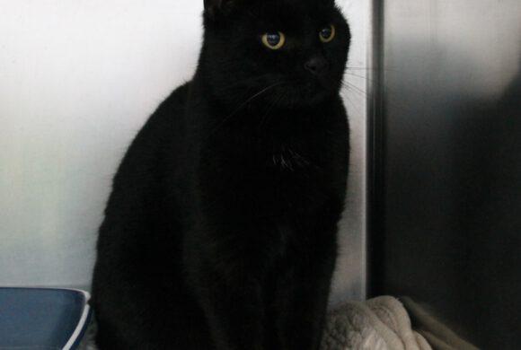 schwarze Katze aus Gifhorn/ Gamsen