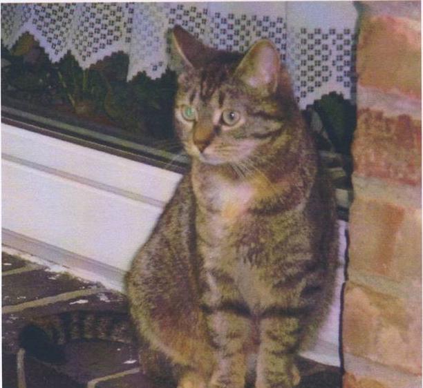 Katze aus Vordorf vermisst!