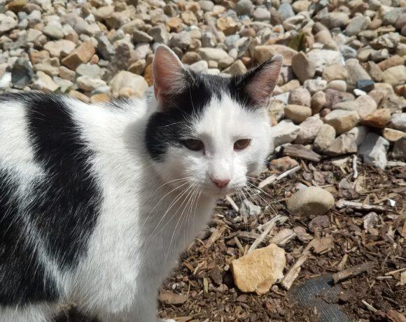 8 Katzen suchen ein neues Zuhause!