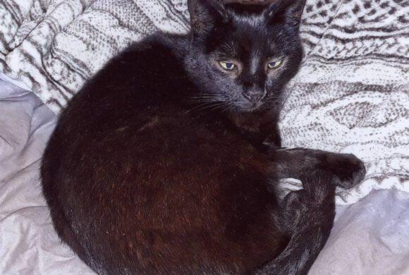 Katze Cephei aus Gifhorn