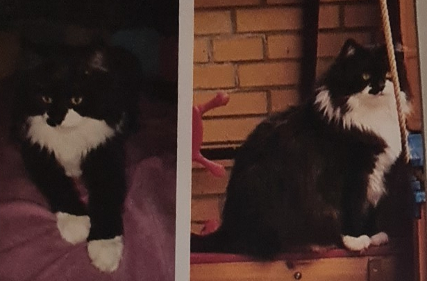 Kater Johnny aus Gifhorn