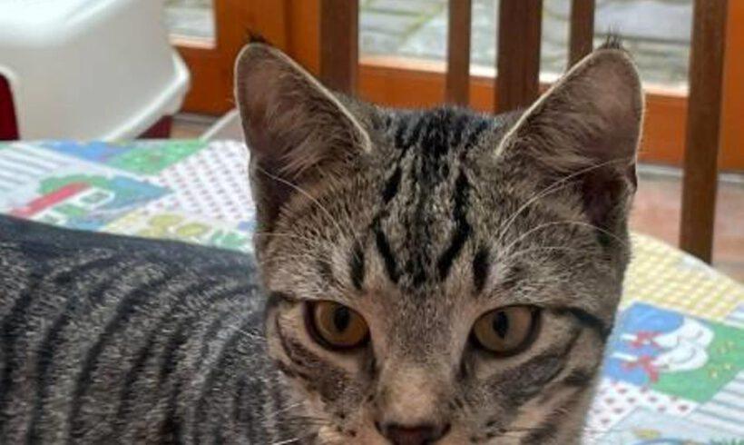 Samson, ca. 7 Monate