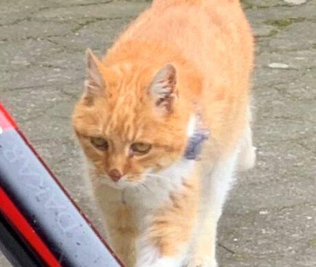 Katze Kraul auf Gifhorn
