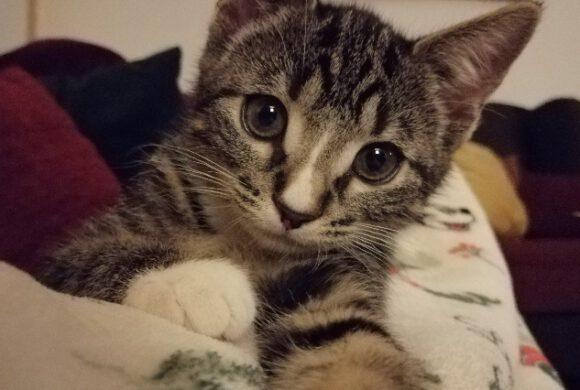 Katze Tilda aus Stüde