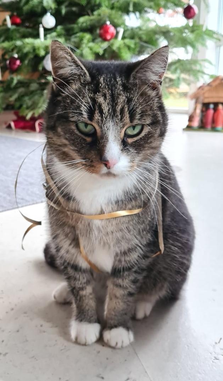 Katze Luna aus Wedelheine