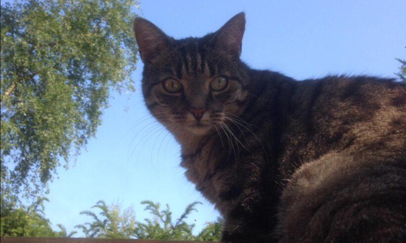 Katze Nomi aus Leiferde