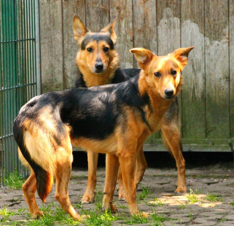 6 junge Hunde aus einer Wegnahme