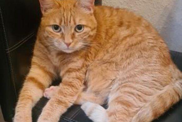 Katze Luci in Isenbüttel vermisst!