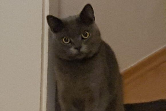 Katze in Meinersen vermisst