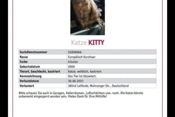 Kitty wird in Leiferde vermisst