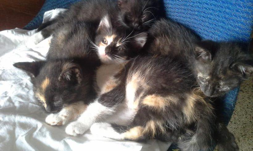 Midnight und ihre Babys
