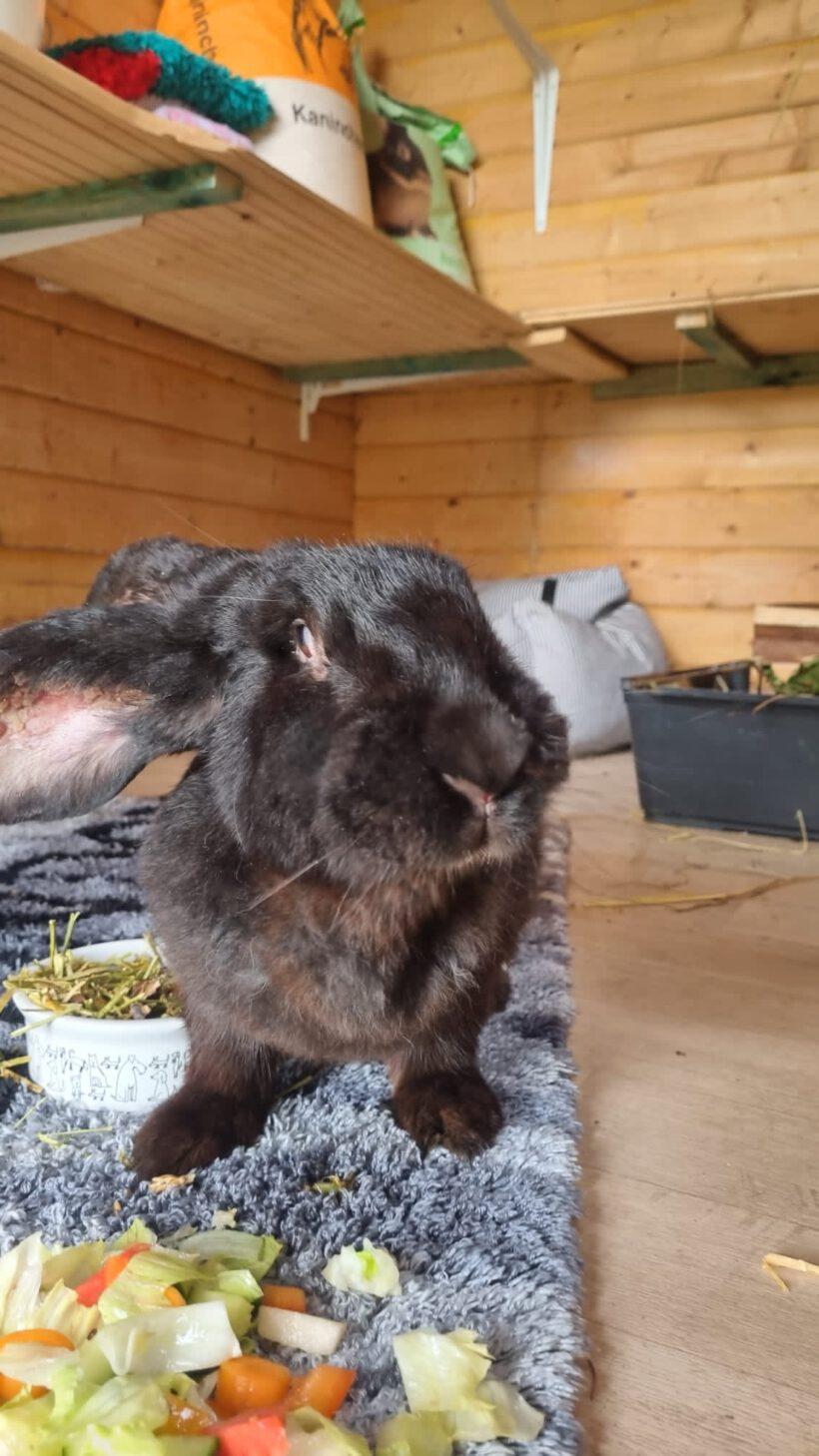 Kaninchen in schlimmem Zustand gefunden