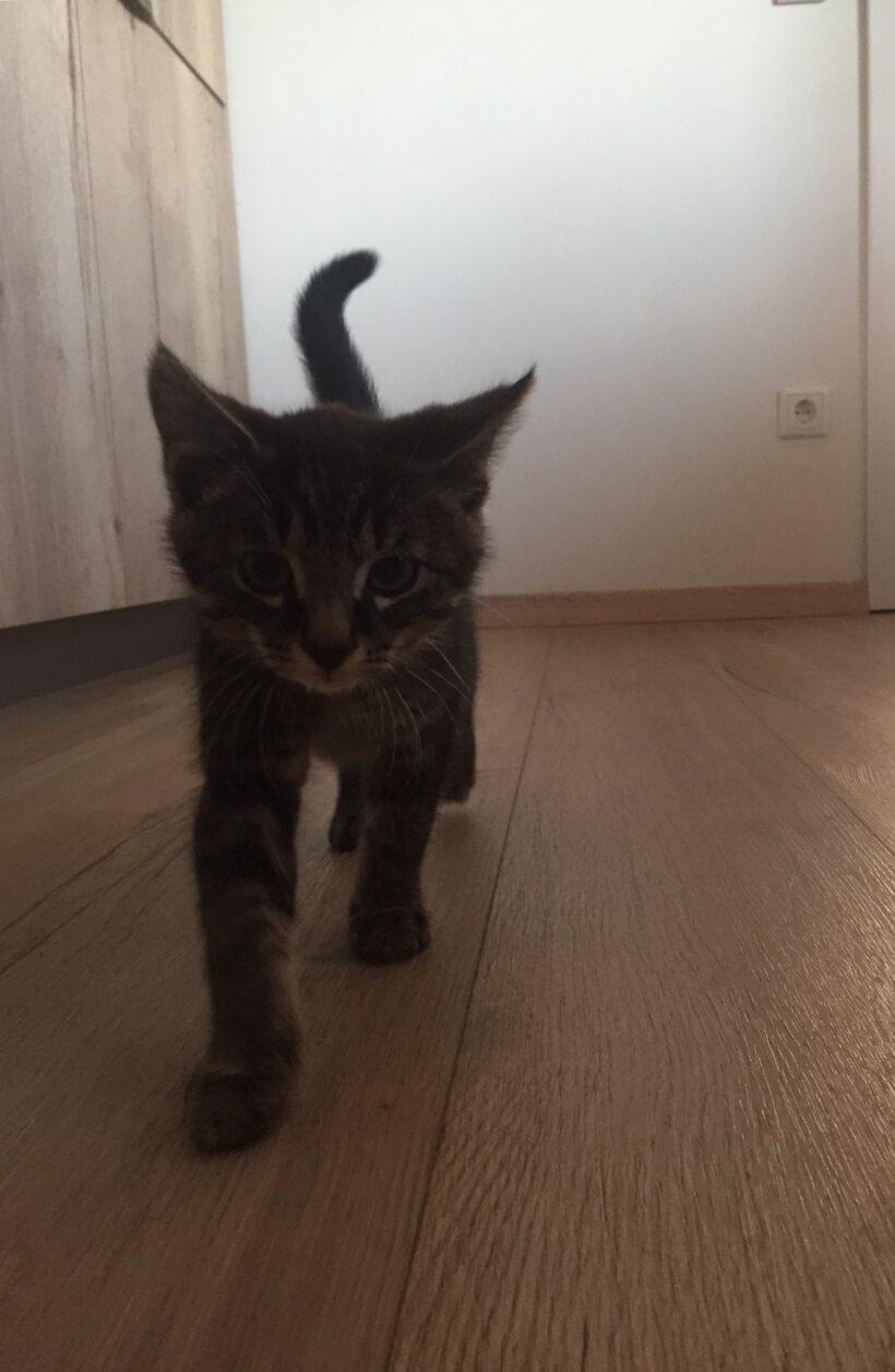 """"""" Tiger"""" wird in Wesendorf vermisst"""