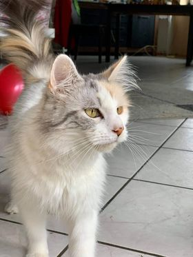 """Katze """" Maus"""" in Ehra vermisst"""
