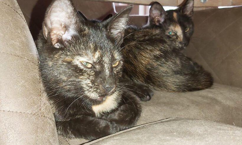 Tiny und Tracy, ca. 3 Monate