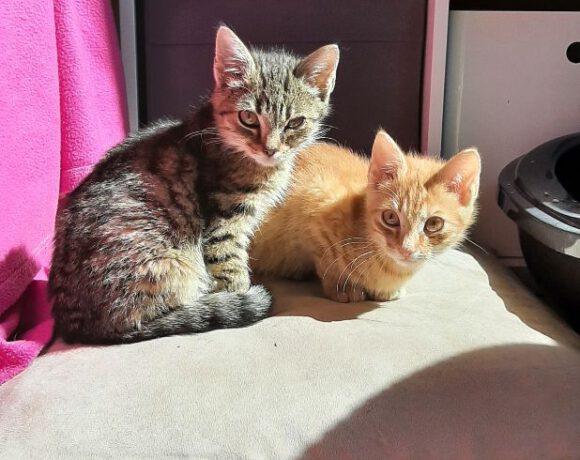 Fini und Maiky, ca. 3 Monate