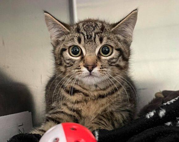 Savanna, ca. 4 Monate