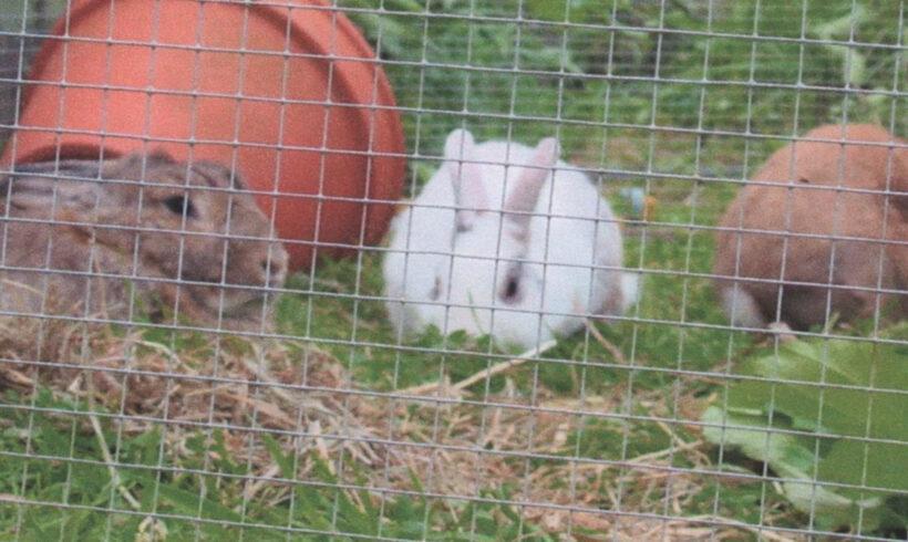 Kaninchen in Melverode vermisst!