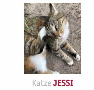 Katze Jessi in Gifhorn vermisst!