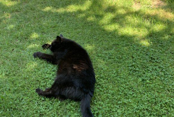 Katze in Gifhorn vermisst!